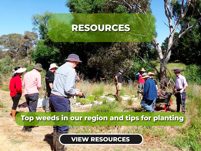 """. Top weeds in our region and tips for planting"